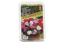 Geranium rood, wit en roze