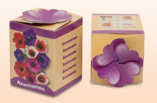 Anemonen standaard (showdoosje) paars