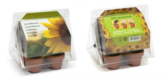 mini serre zonnebloemen geel