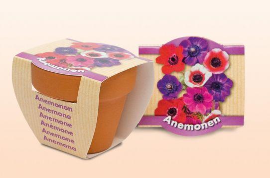 Anemonen standaard (sleeve) paars